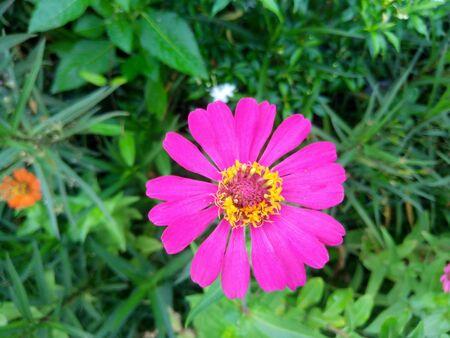 적합: 초속 아름 다운 꽃 정원 장식에 적합합니다.