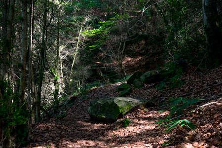 Bosque de la Vall den Bas Foto de archivo
