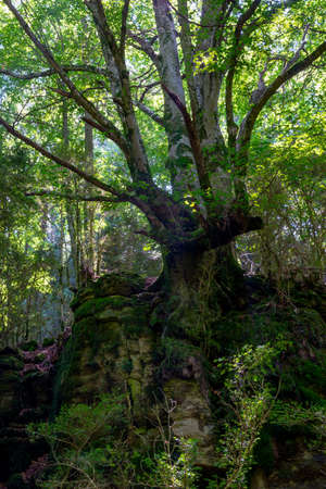 Cracks in the forest by Freixeneda