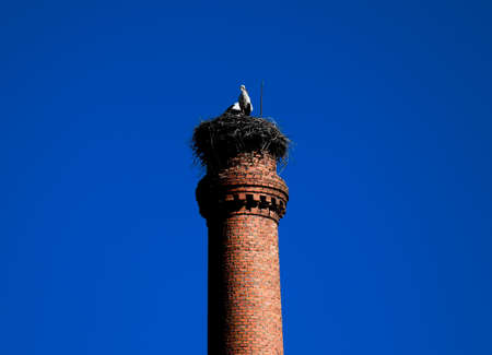 nest of ciconia couple of storks in factory fireplace Foto de archivo