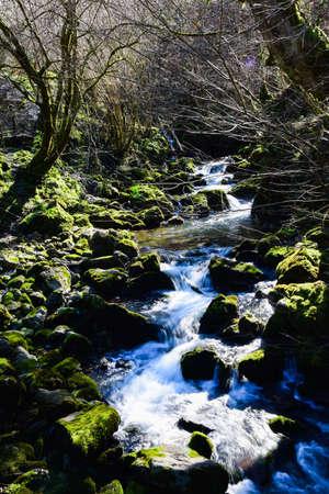 forest river rock cascade in forest creek vertical photo Foto de archivo