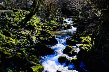 forest river rock cascade forest creek horizontal photo