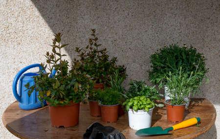 Terrace plantation with seasonal flowers and aromatic herbs Foto de archivo