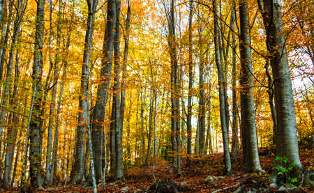Colorful trees and leaves in autumn in the Montseny Natural Park in Barcelona, Spain Stock fotó