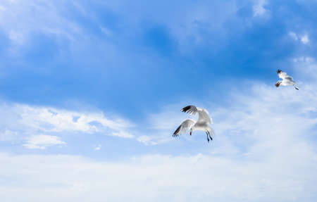 Two white gabiotas flying over blue sky. Natural landscape. Copy space