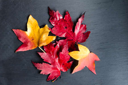 Dry fallen leaves of the tree on a dark background