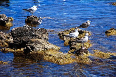 Marettimo  - Egadi Islands (Sicily)
