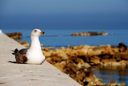 Trapani  Sicily  - seagull Stock Photo - 13684358
