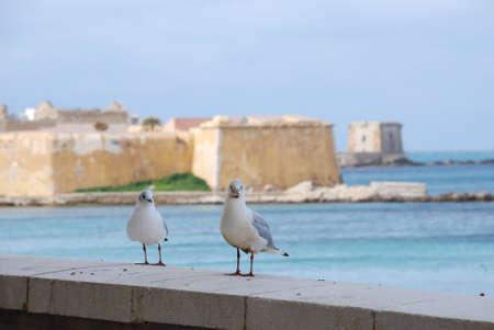 bipedal: seagull Stock Photo