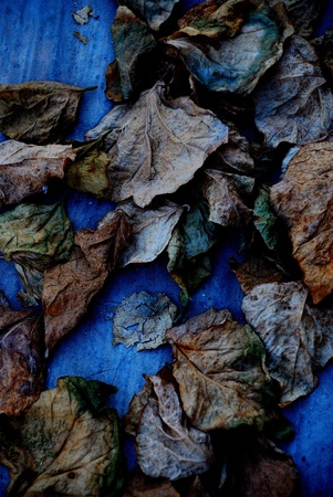 impermanent: dead leaves Stock Photo