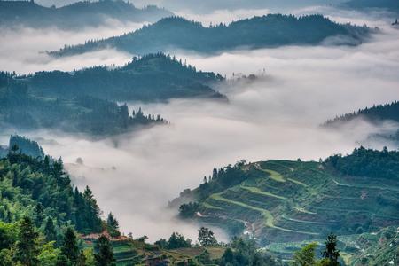 Rijstterrassen gehuld in mist in de vroege ochtend Stockfoto