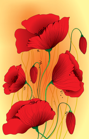 papaver:  Papaver somniferum poppy flowers Maquis Illustration