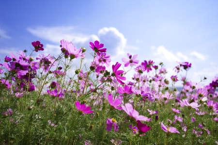 beautiful Purple flower and blue sky