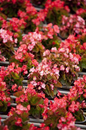rad flower