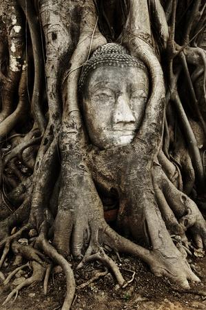 buddha head in Root wood