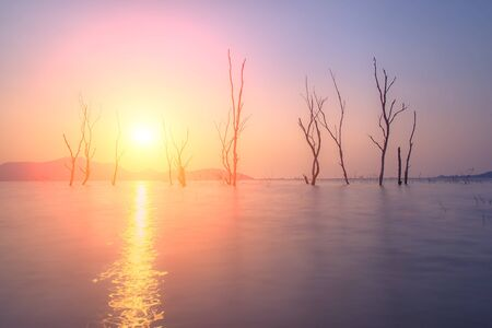 Dead tree standing at the flood of lake with sunset