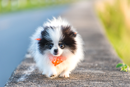 puppy dog running on the road park Stock Photo