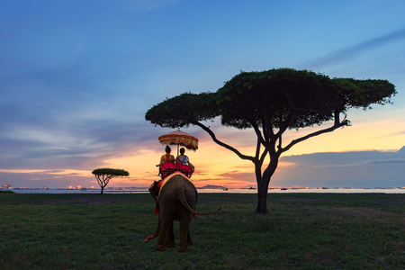 Tourist on elephant sightseeing in Phuket,sightseeing,travel,sunset, Thailand Stock Photo