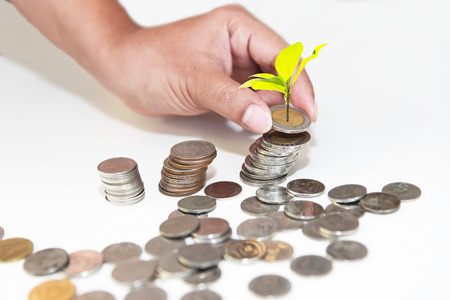 Plant Growing In Savings Coins and saving money. Investment Concept