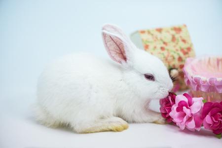 White rabbit small white dwarf Standard-Bild
