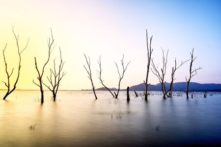 Dead trees in the water, spring at the lake with sunset Stock Photo