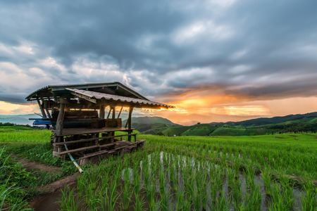 Rice fields on terraced of Mu Cang Chai, YenBai, Vietnam. Rice fields prepare the harvest at Northwest Vietnam 写真素材