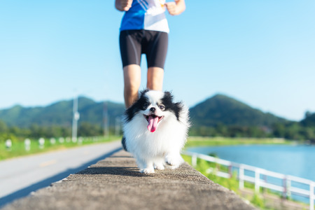 puppy dog running exercise with the woman in the morning Фото со стока