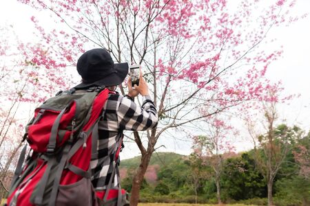 Girl Hand holding smartphone taking photo of cherry blossom in spring time. mobile phone to capture images of the cherry blossoms tree Фото со стока