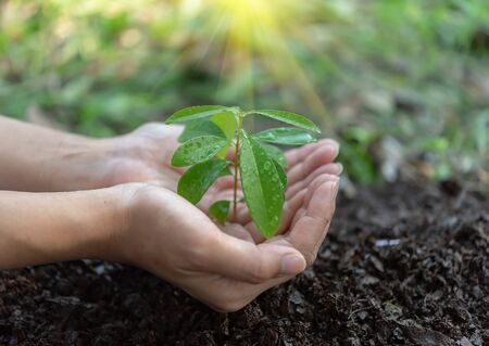 Hands are planting plants on black soil. Save the world concept.