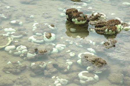 bleaching: coral bleaching  Stock Photo
