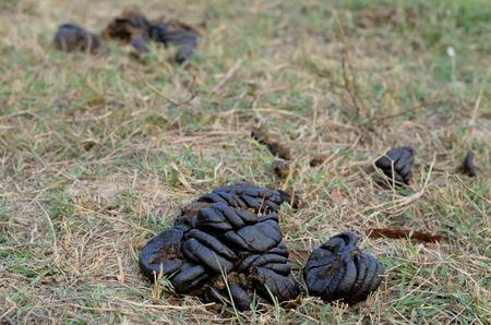 dung: art cow dung in garden Stock Photo
