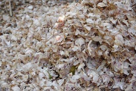 fertilizer: pile peel garlic for is fertilizer Stock Photo