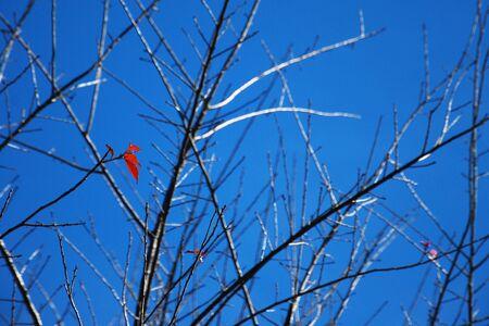 Last leaf on the tree in autumn Reklamní fotografie