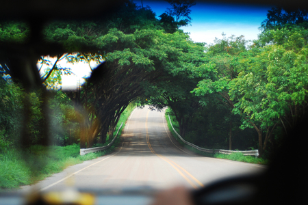 Green tree tunnel view from inside the car through outside the car window of a roadside view