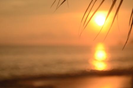 열 대 일몰 해변에서 팜 리프를 흐리게 추상 배경입니다. 여행 개념입니다.