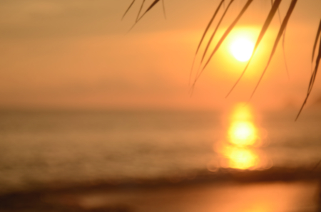Blur palm leaf on tropical sunset beach abstract background.Travel concept. Standard-Bild