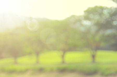 blur: Blur outdoor nature green park abstract background.