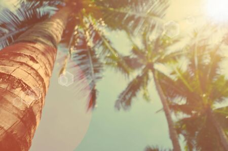 Blur tropical palm tree with sun light abstract background.Retro color style. Standard-Bild