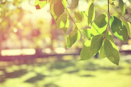 太陽光の抽象的な背景と緑の自然公園をぼかし。