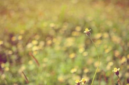 tiefe: Blumen im Park, seichte Tiefe des field.Retro Farbe Stil.