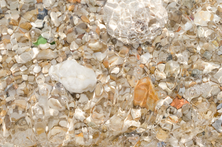 Dried coral and sea shells on sand beach texture background. Summer vacation and travel adventure nature concept.