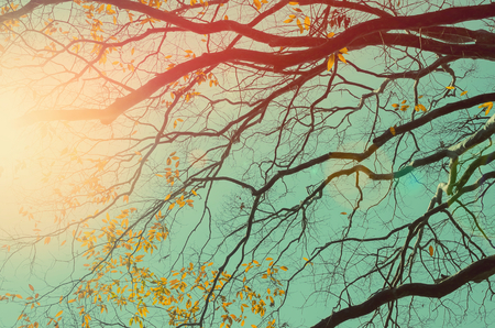Nature autumn silhouette tree branch on sky abstract background. Ecology and environment concept. Vintage tone filter color style. Stock Photo