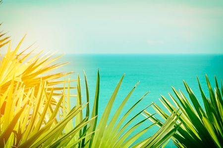 bahama: Frame of tropical green palm leaf and sun light on beach and blue sky abstract background. Copy space of travel relax and environment ecology concept. Vintage tone filter effect color style.