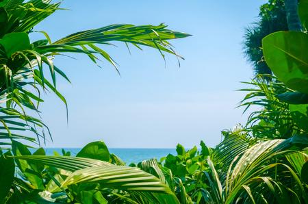 열 대 녹색 팜 리프 및 태양 해변 및 파란 하늘 빛의 프레임 추상적 인 배경입니다. 여행의 공간을 복사 긴장 및 환경 생태 개념입니다. 빈티지 톤 필터 효과 색상 스타일입니다. 스톡 콘텐츠 - 83081473