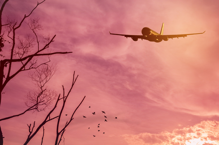 Airplane flying over tree branch and birds fly on sunset sky background. Copy space of business summer vacation and travel adventure transportation concept. Vintage tone filter effect color style.