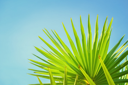 Copy space of tropical palm tree with sun light on blue sky and white cloud abstract background. Summer vacation and nature travel adventure concept. Vintage tone filter effect color style.