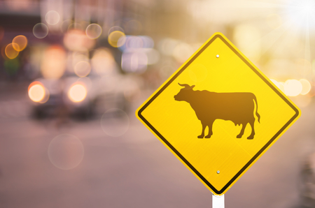 Animal or cow warning sign on blur traffic road with colorful bokeh light abstract background. Copy space of transportation and travel concept. Retro tone filter effect color style. Stock Photo