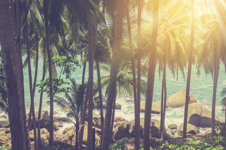 Tropical palm tree on beach with blue sky abstract background. Copy space summer vacation holiday and business travel adventure concept. Vintage tone filter effect color style. 版權商用圖片