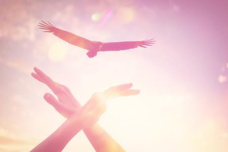 Femme main oiseau pointu voler avec aigle sur ciel coucher de soleil et nuages blancs abstrait. Concept de liberté et de vacances d'été. Style de couleur d'effet de filtre de ton vintage.