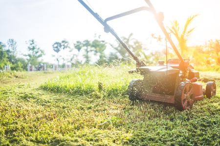 Lawn mower machine cutting grass in sunset. Imagens